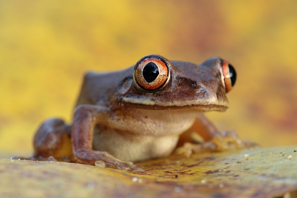 story of a frog by preeth nambiar